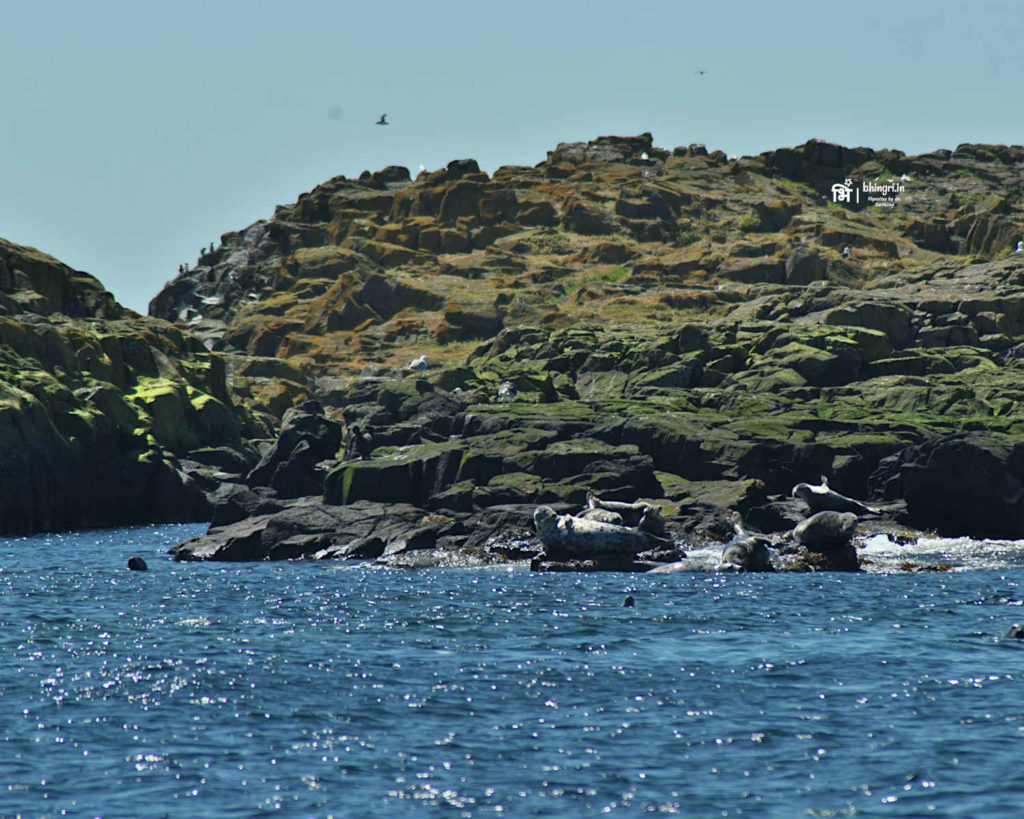 Grey Seals!!! Do you spot these gorgeous animals above?
