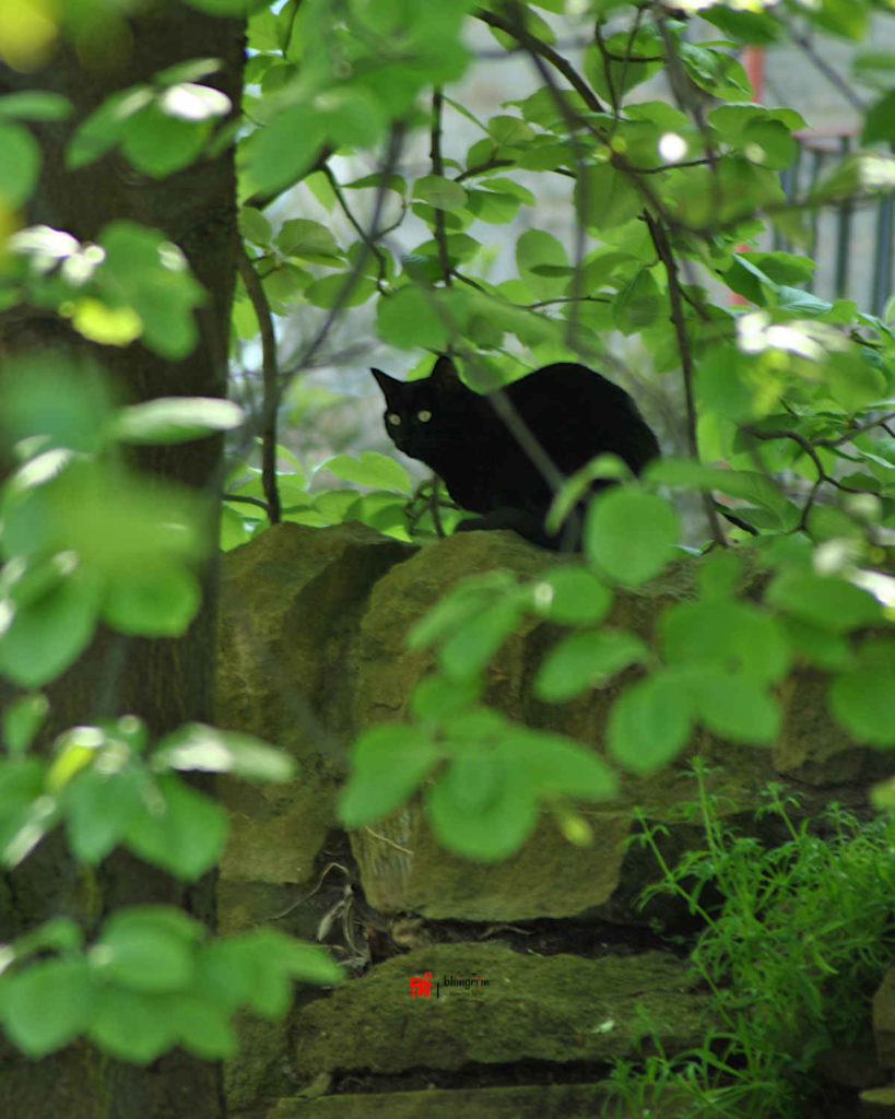 In a quiet nook of Edinburgh, I once chanced upon this little feline cutie