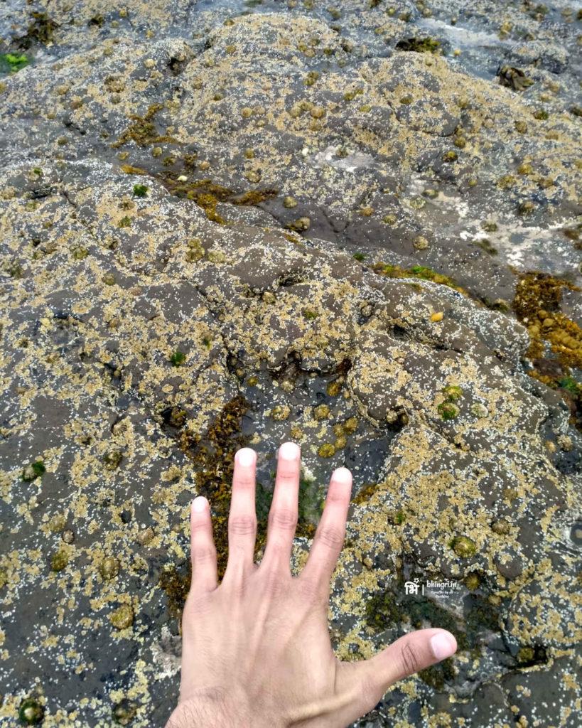 Sauropod footprint at Duntulum
