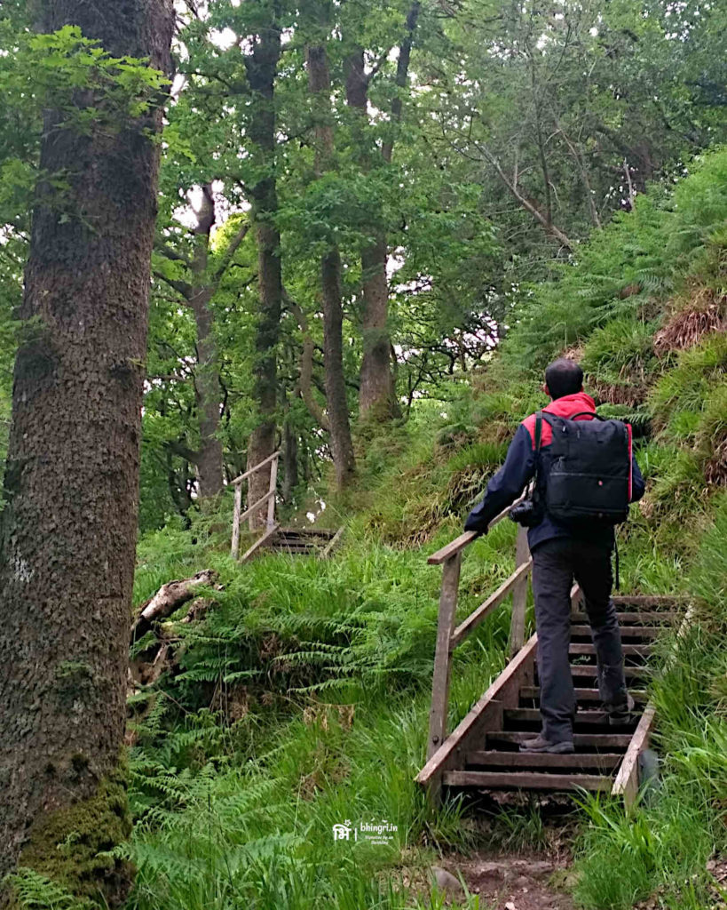 Forest trails on Inchcailloch are well defined